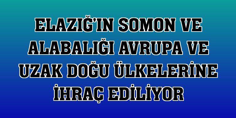 Elazığ'ın somon ve alabalığı Avrupa ve Uzak Doğu ülkelerine ihraç ediliyor
