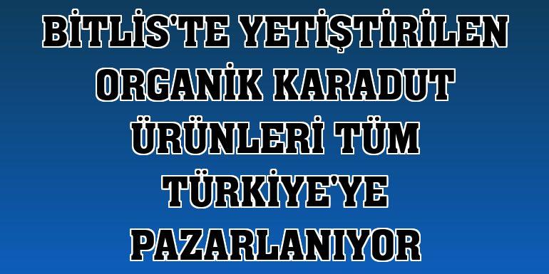 Bitlis'te yetiştirilen organik karadut ürünleri tüm Türkiye'ye pazarlanıyor