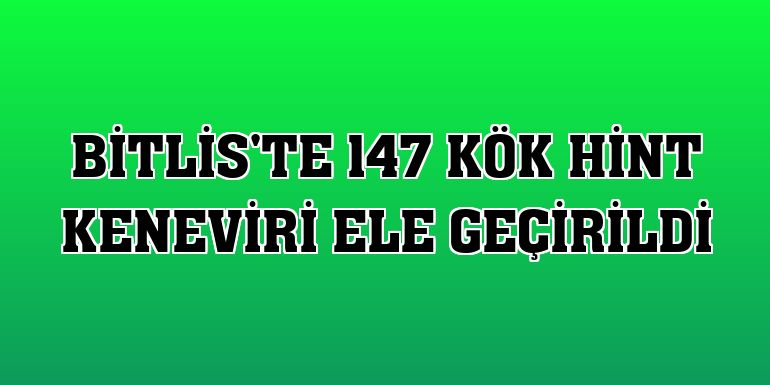 Bitlis'te 147 kök Hint keneviri ele geçirildi