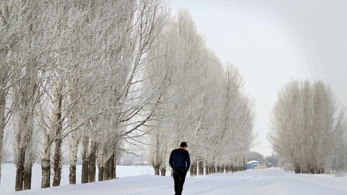 Ağrı'da ağaçlarda oluşan kırağı güzel görüntüler oluşturdu