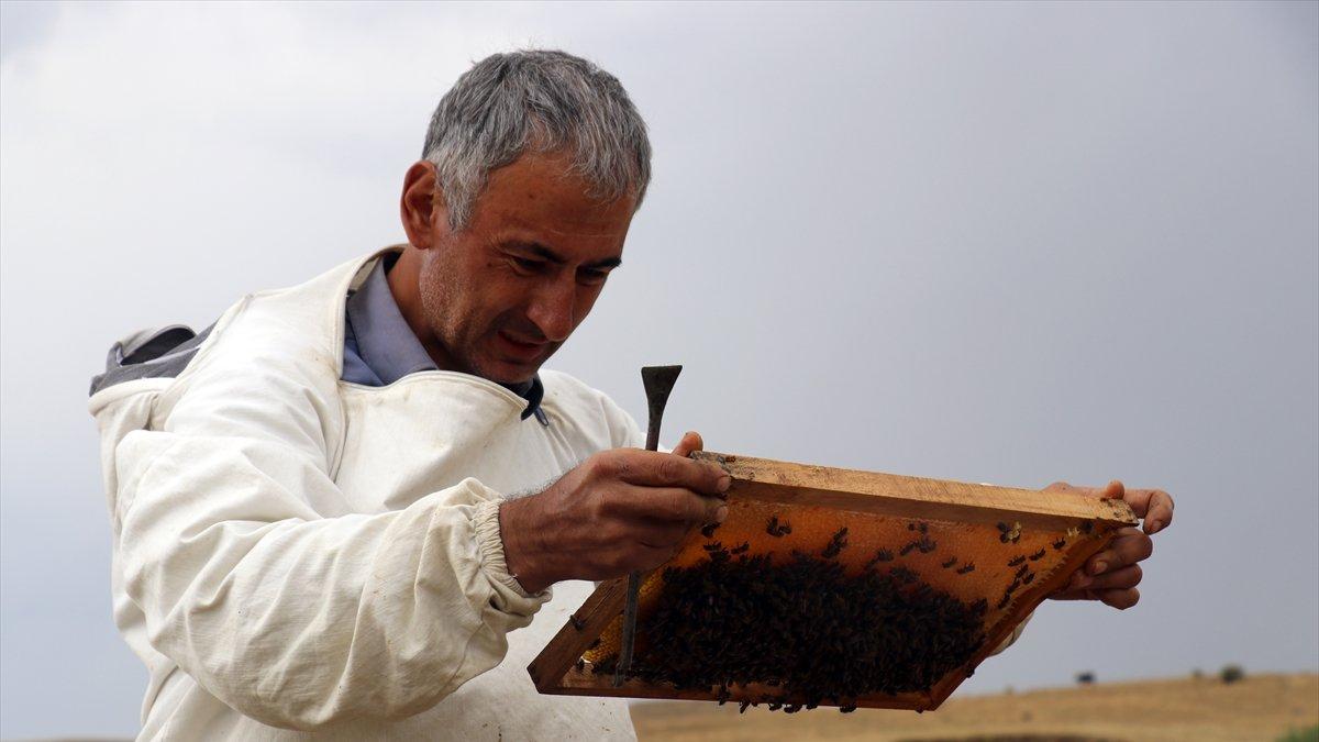 Ağrı'da yüksek rakımlı yaylalardaki göçer arıcılar zorlu bal hasadında