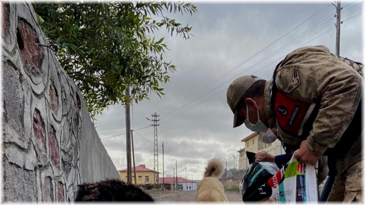 Ardahan'da jandarma hayvanları koruma gününü unutmadı