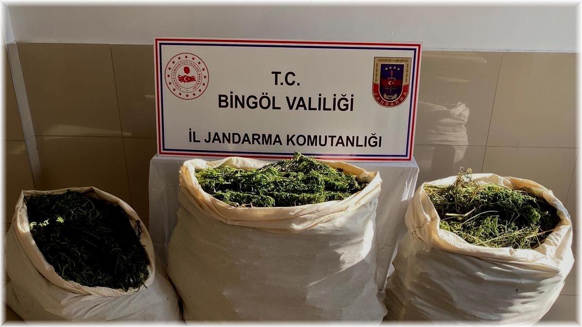 Bingöl'de 174 kilo esrar ve 700 kök kenevir ele geçirildi