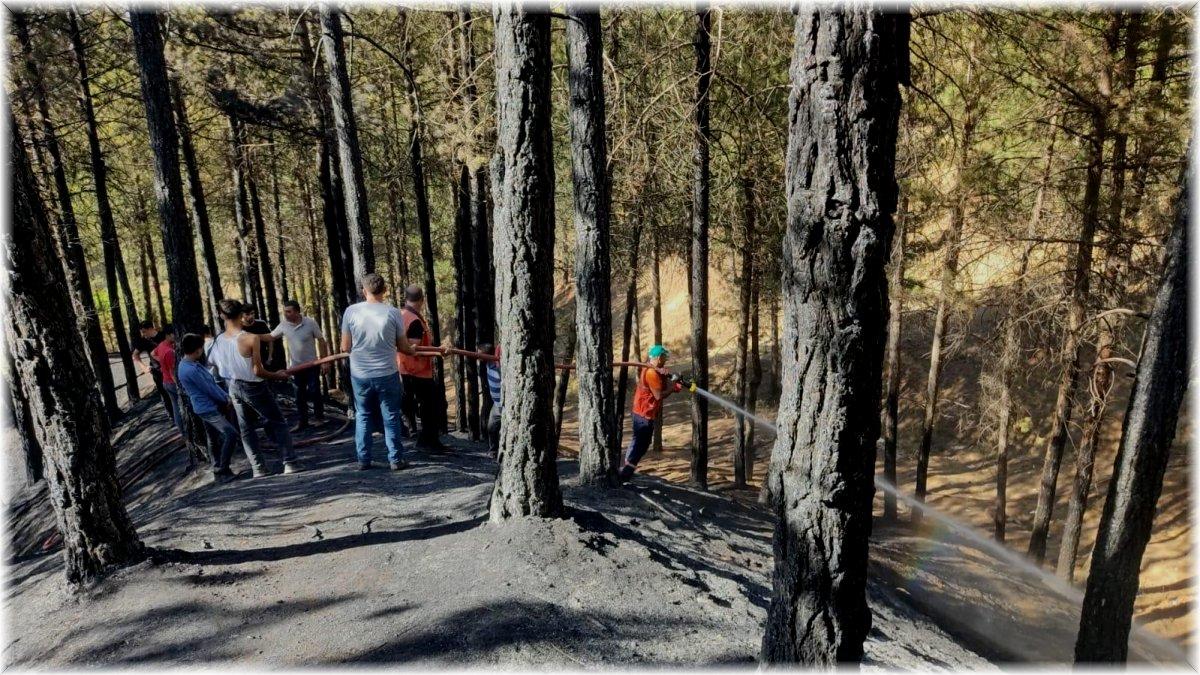 Bingöl'de çamlık alanda çıkan yangın büyümeden söndürüldü