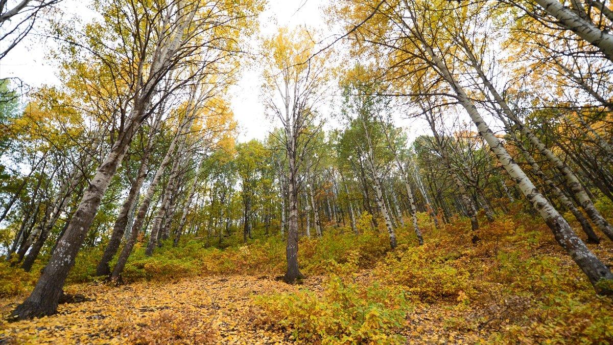 """Doğaseverlerin sonbahardaki uğrak noktası: """"Salördek ormanları"""""""