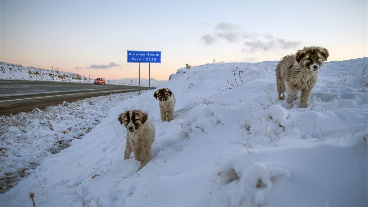 Donma tehlikesi geçiren yavru köpekleri belediye ekipleri kurtardı