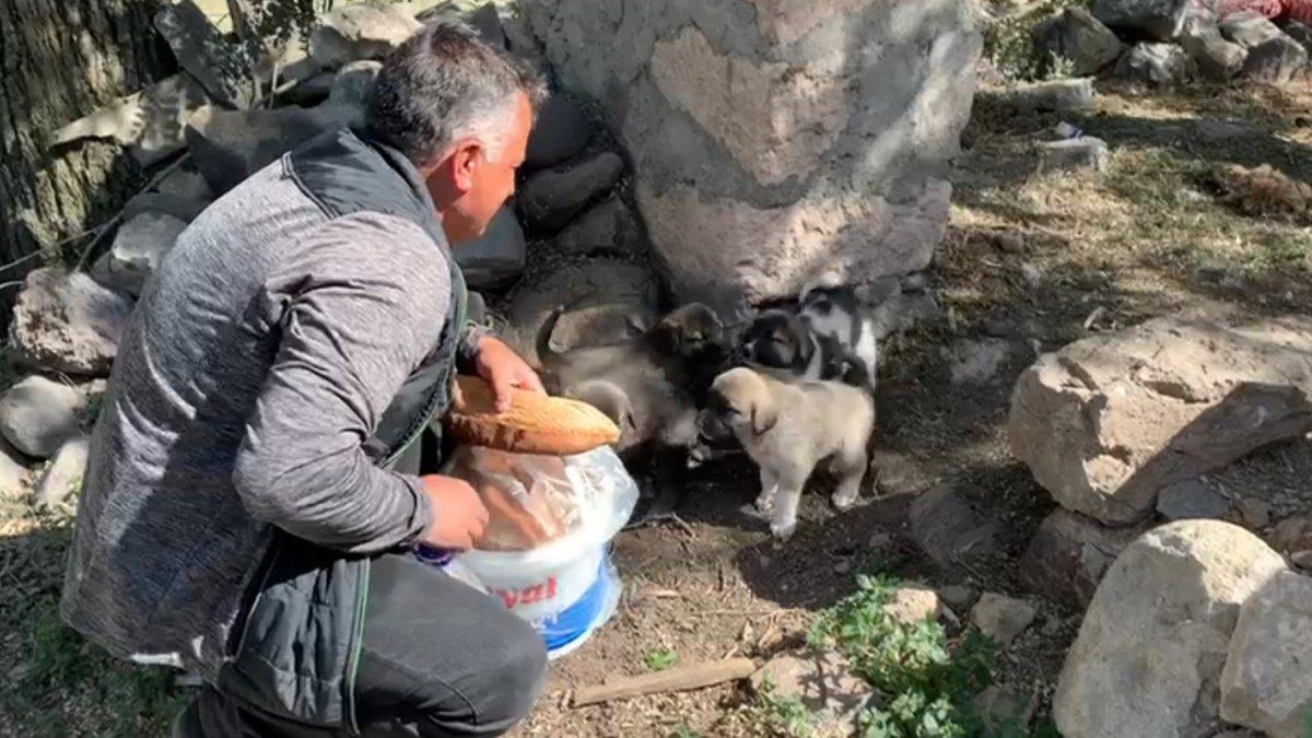 Duyarlı vatandaş sokak hayvanları doyuruyor