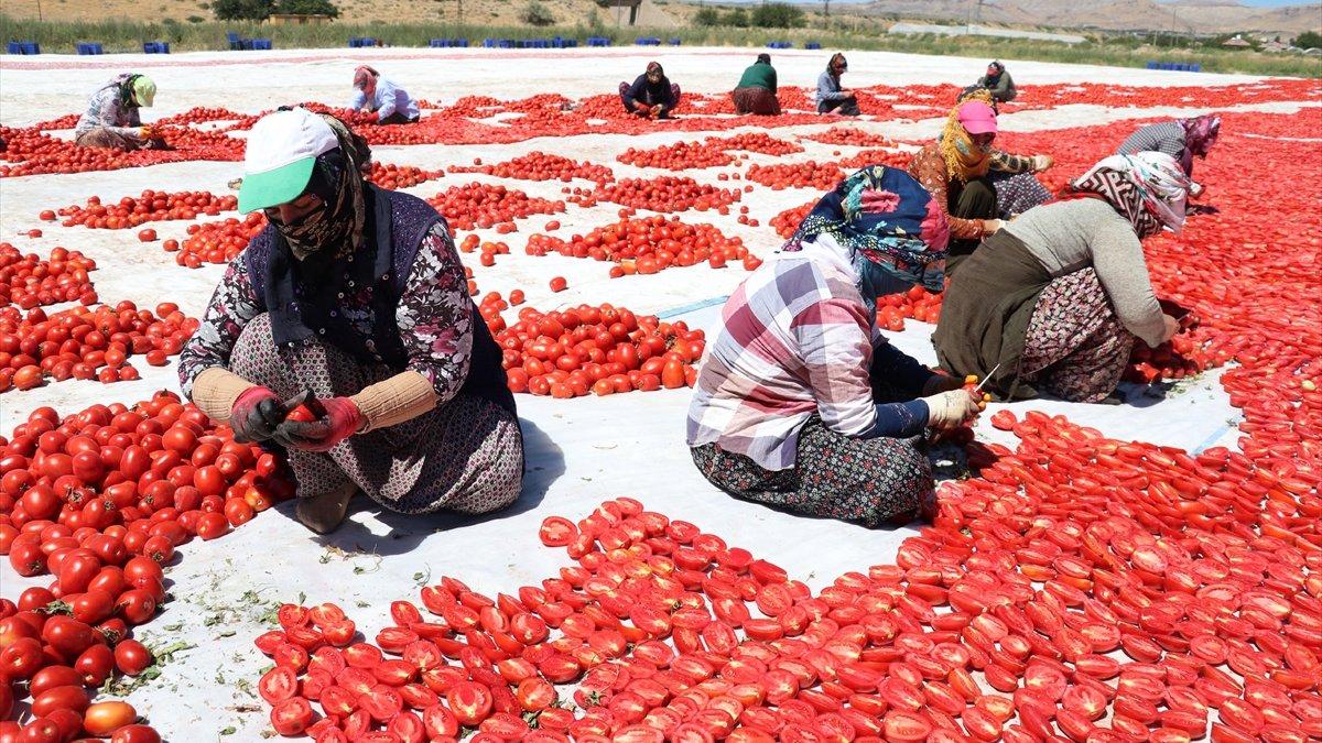 Elazığ'dan 500 ton kurutulmuş domates ihracatı hedefleniyor