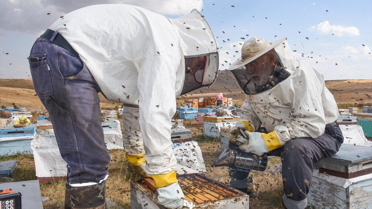 """Havaların soğuduğu Kars'ta bal üreticileri arıları erken """"kışlattı"""""""