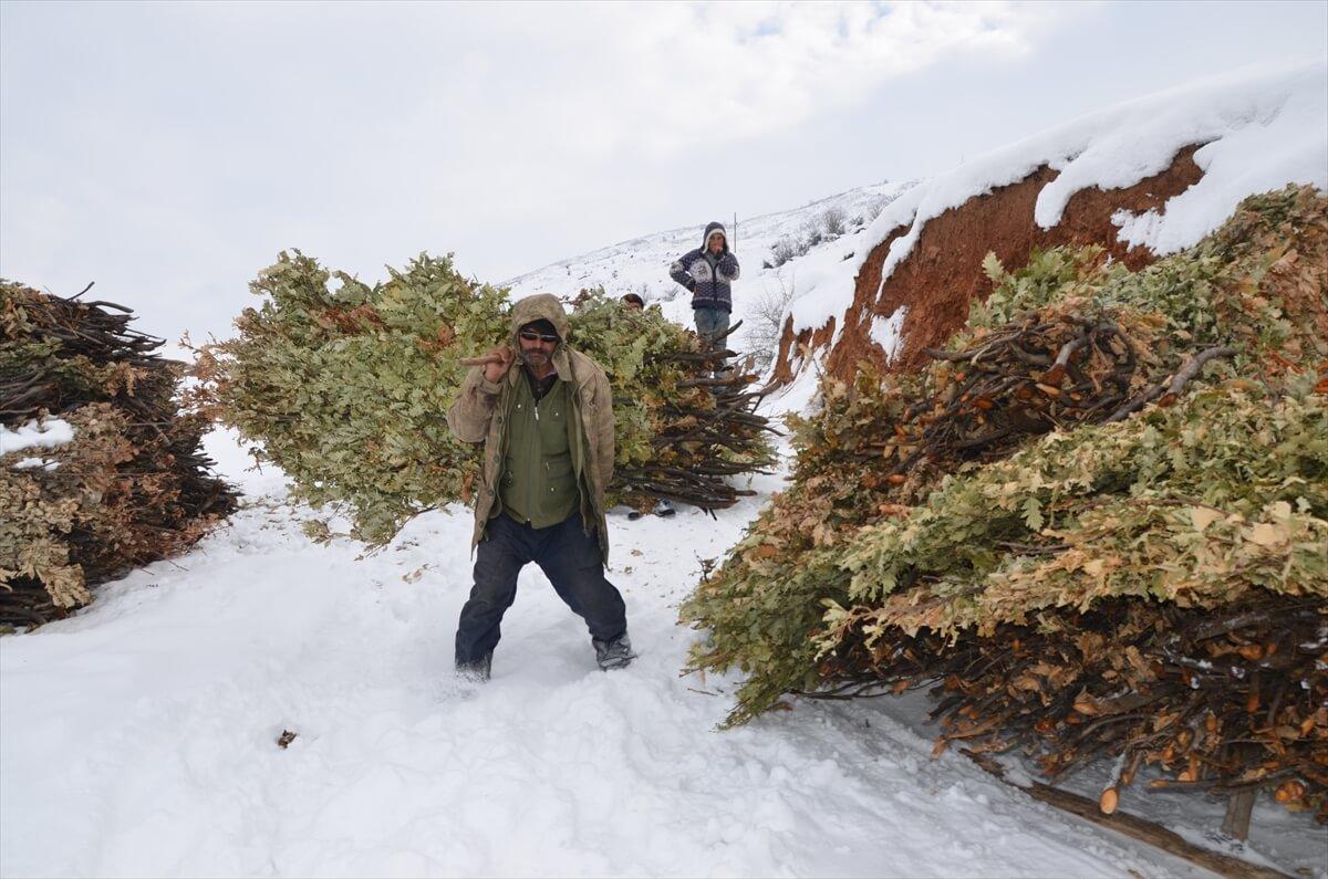 Hayvanlarını beslemek için karlı tepelerden kızakla ot taşıyorlar