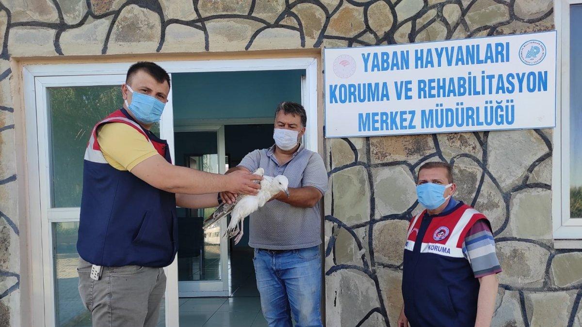 Jandarmanın yaralı bulduğu kuşlar tedavi altına alındı