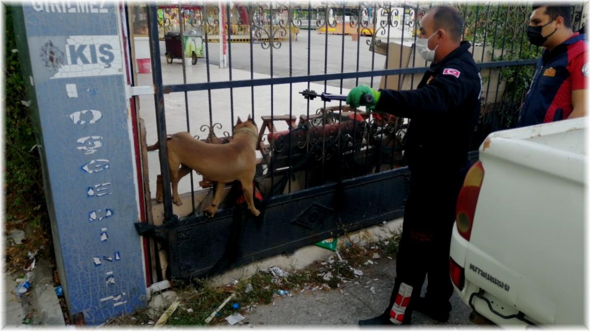 Kafası demir kapıya sıkışan pitbull cinsi köpeği itfaiye kurtardı