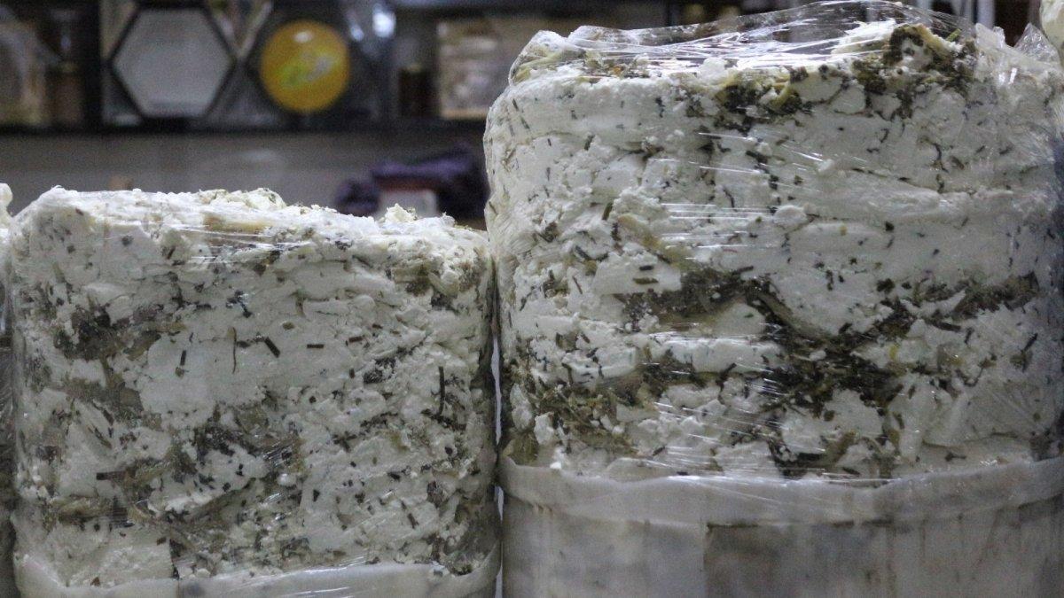 Otlu peynirde kullanılan bitkiler yok olma riski altında
