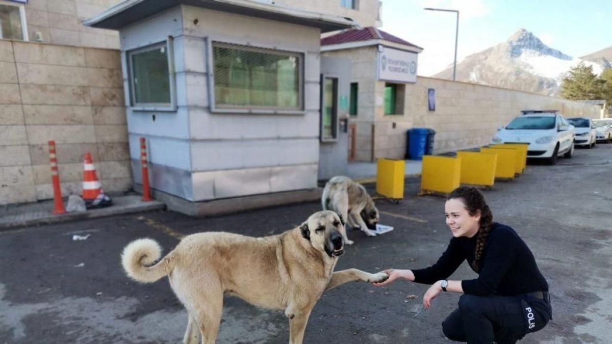 Tercan'da polislerden sokak hayvanlarına mama ve su desteği
