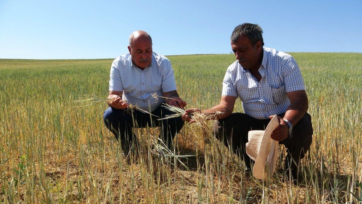 Van'da kuraklık çiftçileri vurdu