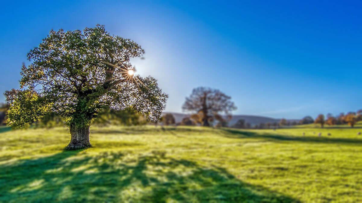 Rüyada Ağaç Dikmek Ne Anlama Gelir?