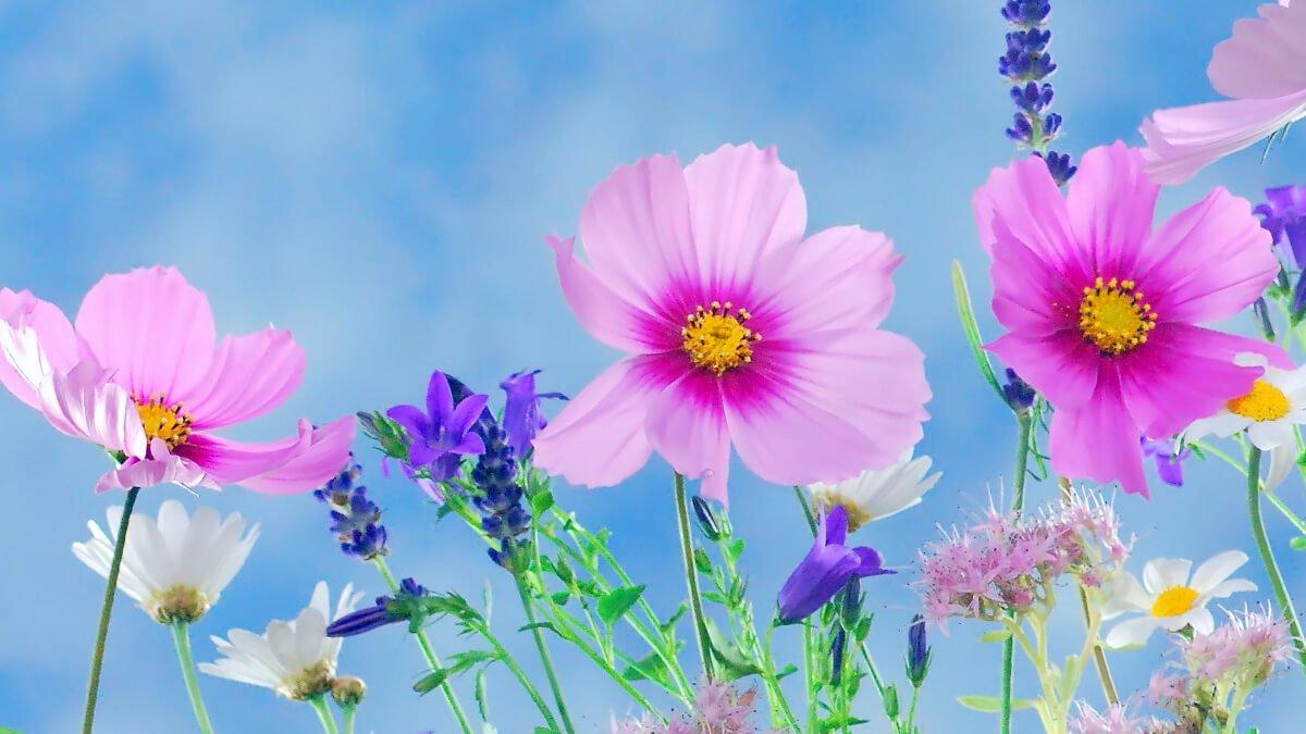 Rüyada Çiçek Görmek