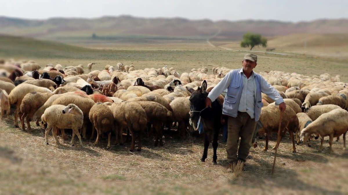 Rüyada Çoban Görmek Olmak, Çobanlık Yapmak Ne Anlama Gelir?