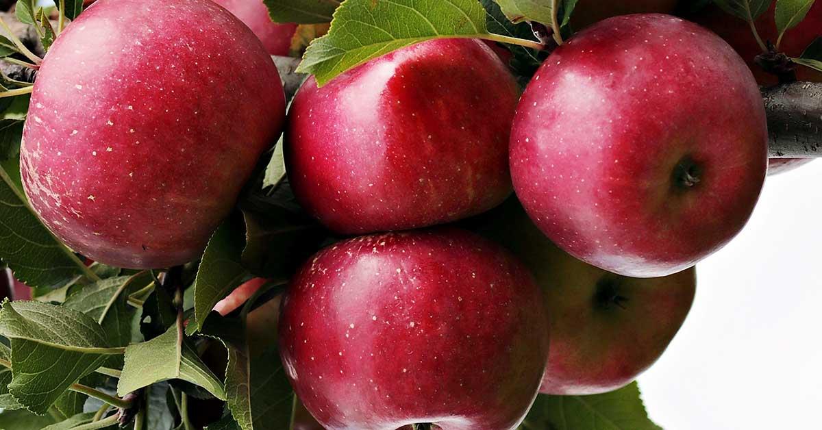 Rüyada elma görmek ne anlama gelir?