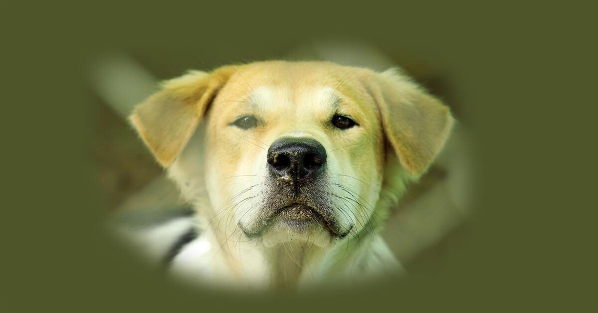Rüyada Köpek Görmek Ne Anlama Gelir? Neye İşarettir?
