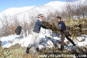 Hayvanları için karlı tepelerden ot taşıyorlar