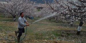 Baskil'de kayısı ağaçları ilaçlanıyor