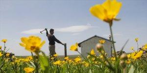 Besiciler çiçeklerle süslenen yaylalarına kavuşuyor