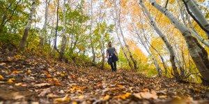 Tunceli ormanlarında güz renkleri göz kamaştırıyor