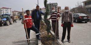 Bulanık Belediyesinden ağaçlandırma çalışması