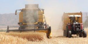 Kuraklık hasadı başlayan buğdayı da vurdu, rekolte yüzde 70'lere kadar düştü