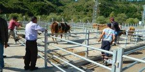Posof hayvan pazarı yeniden açıldı