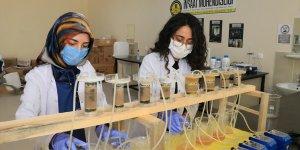 Bilim insanları tarihi yapıları ve inşaata elverişsiz zeminleri bakterilerle güçlendirecek