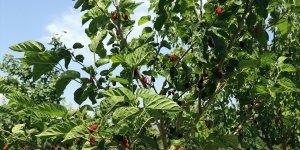 Ağrı Dağı eteklerindeki çorak araziyi meyve ağaçlarıyla vahaya dönüştürdü