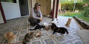 """Elazığ'da belediye başkanı """"can dostlara"""" anne şefkatiyle bakıyor"""