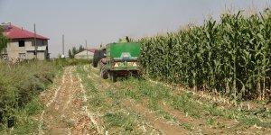 Muş'ta silajlık mısır hasadına başlandı