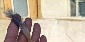 Elazığ'da nesli tükenme tehlikesi altında bulunan Arap tavşanı görüntülendi