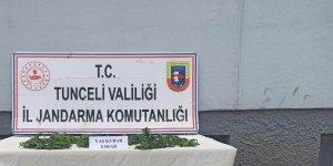 Tunceli'de uyuşturucu operasyonu: 1 gözaltı