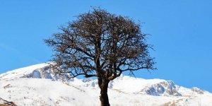 Tunceli'nin yüksek kesimlerinde kar yağışı etkili oldu
