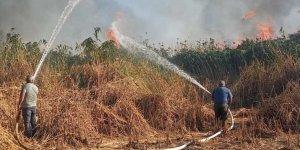 Tatvan'da sazlık alanda çıkan yangın itfaiye ekiplerince söndürüldü