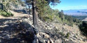 Kars'ta çıkan orman yangınında 1 hektarlık alan zarar gördü