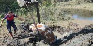 Bingöl'de çamurda mahsur kalan ineği itfaiye ekipleri kurtardı