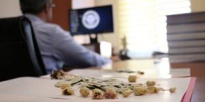 'Efsane Vali' Recep Yazıcıoğlu'nun ismi 9 yıl görev yaptığı Erzincan'da yetişen çiçekte yaşatılıyor