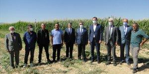 Yazıhan'da silajlık mısır hasadı yapıldı