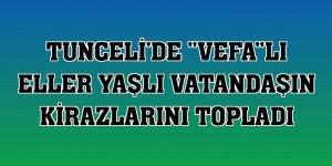 Tunceli'de 'Vefa'lı eller yaşlı vatandaşın kirazlarını topladı