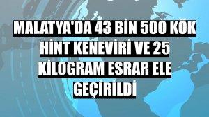 Malatya'da 43 bin 500 kök Hint keneviri ve 25 kilogram esrar ele geçirildi