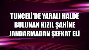 Tunceli'de yaralı halde bulunan kızıl şahine jandarmadan şefkat eli