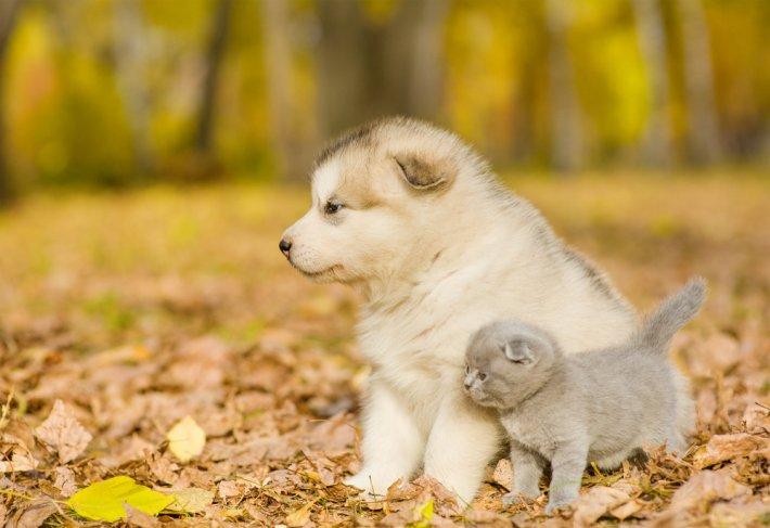 Rüyada Yavru Köpek Görmek