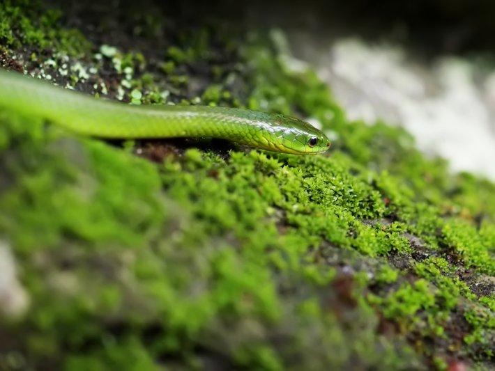 Rüyada Yeşil Yılan Görmek