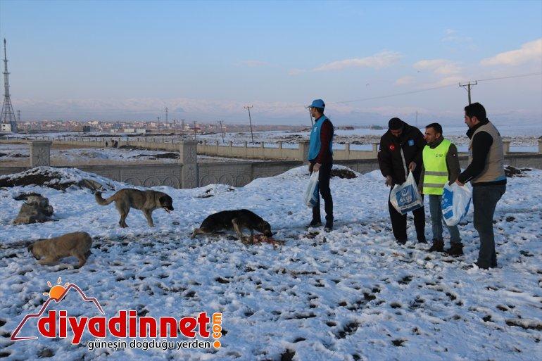 Ağrılı gönüllüler yaban hayvanları için seferber oldu11