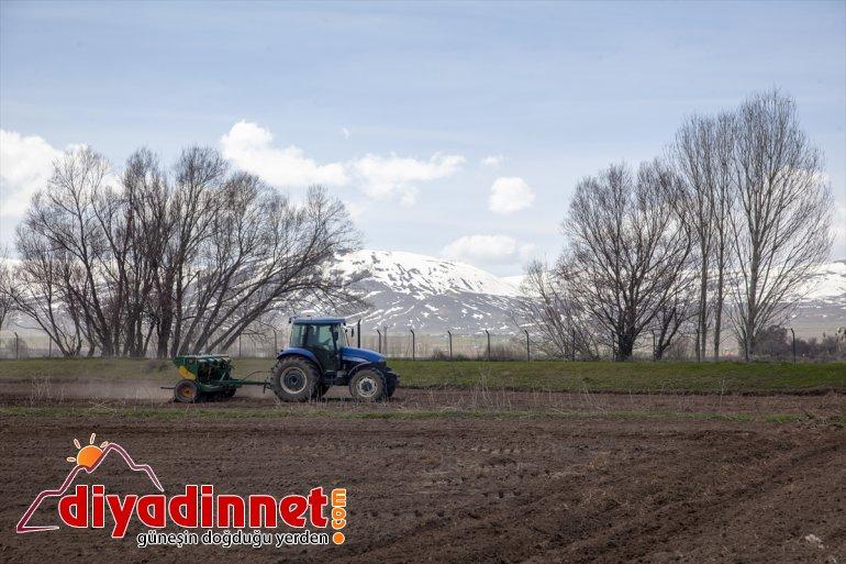 BİTLİS çiftçilerin mesaisi - başladı bahar Ahlatlı 2